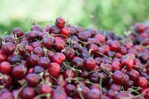 Des_fruits_savoureux_1