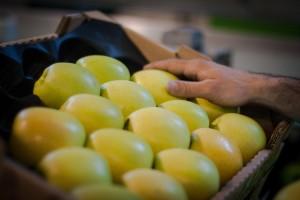 Des_fruits_surs_2